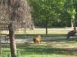 1000_1502369259gradski-park-tuzla-zivotinje_(2)