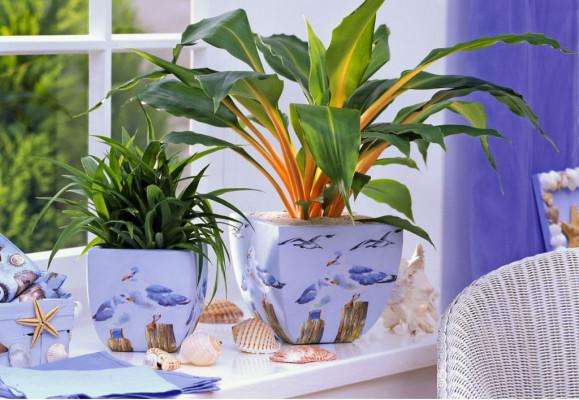 61466756-sobno-bilje-biljke-cvijece