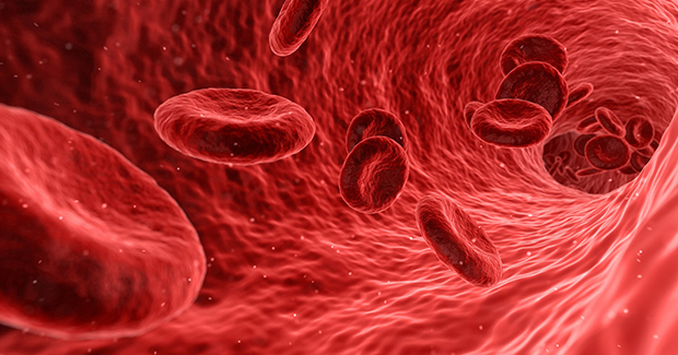 Krv---Pixabay