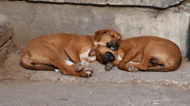 Two canine puppies, living on the street snuggle under a sign advertising repair work services at a market in the Vasant Enclave colony in New Delhi on February 18, 2015.     AFP PHOTO / Roberto SCHMIDT