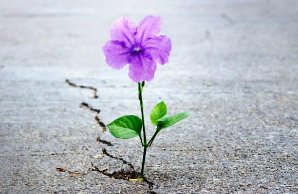 61668871-cvijet